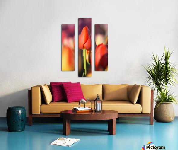 Woodburn, Oregon, United States Of America; Close Up Of A Closed Tulip Canvas print
