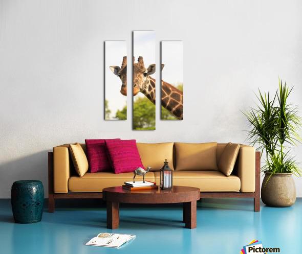 Buenos Aires, Argentina; Giraffe (Giraffa Camelopardalis) In Palermo Zoological Gardens Canvas print