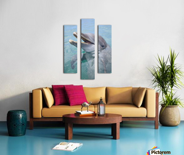 Roatan, Bay Islands, Honduras; A Bottlenose Dolphin (Tursiops Truncatus) In The Water At Anthony's Key Resort Canvas print