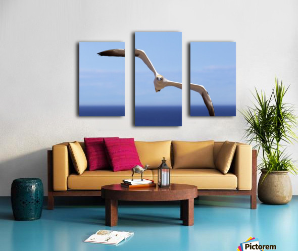 Gannet Flying Over The Water; Perce, Quebec, Canada Canvas print