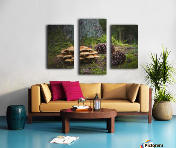 Mushrooms And Pine Cones On The Forest Floor; Northumberland, England Canvas print