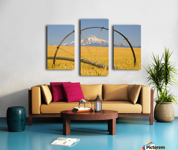 Irrigation Pipe In Wheat Field With Mount Hood In Background; Oregon, Usa Canvas print