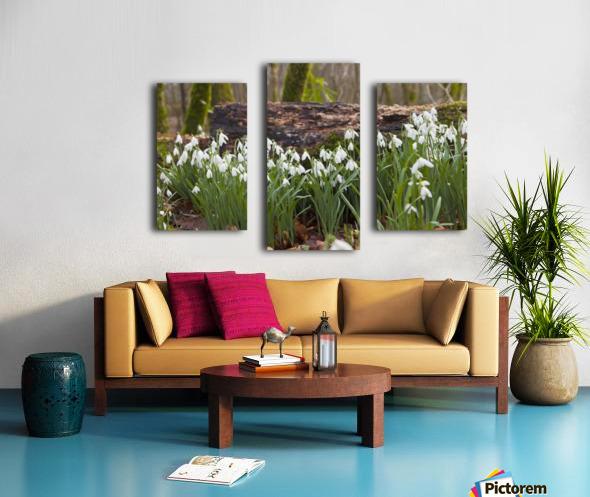 White Flowers Growing On A Forest Floor Beside A Fallen Tree; Dumfries, Scotland Canvas print