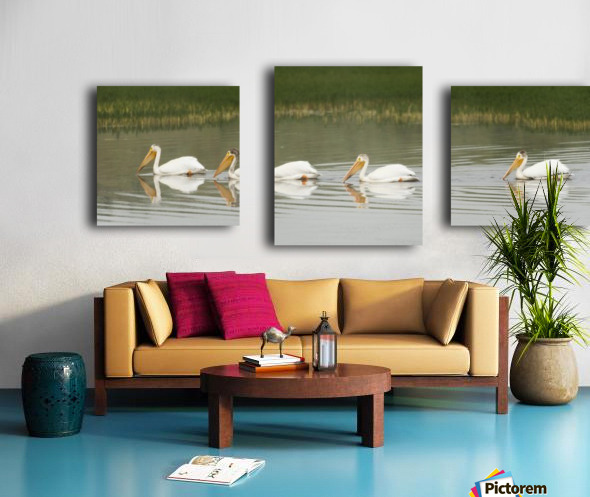 American White Pelicans Swim In A Line On The Yellowstone River; Wyoming, Usa Canvas print