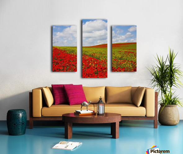 An Abundance Of Red Poppies In A Field; Corbridge, Northumberland, England Canvas print