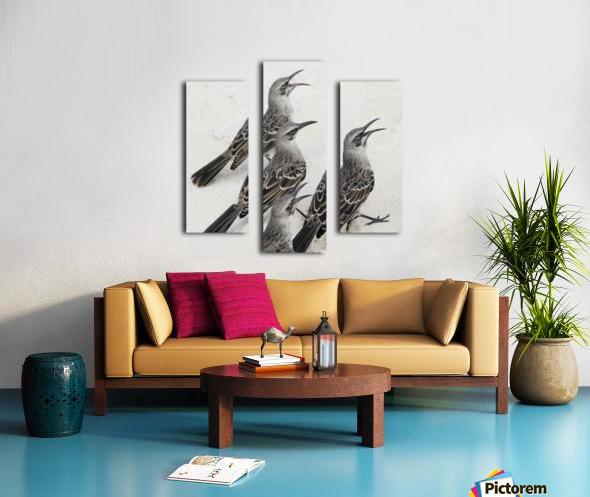 Mockingbirds (Mimidae); Galapagos, Equador Canvas print
