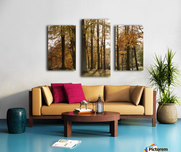 Trees In Autumn Colours Casting A Shadow On The Ground; Northumberland, England Canvas print