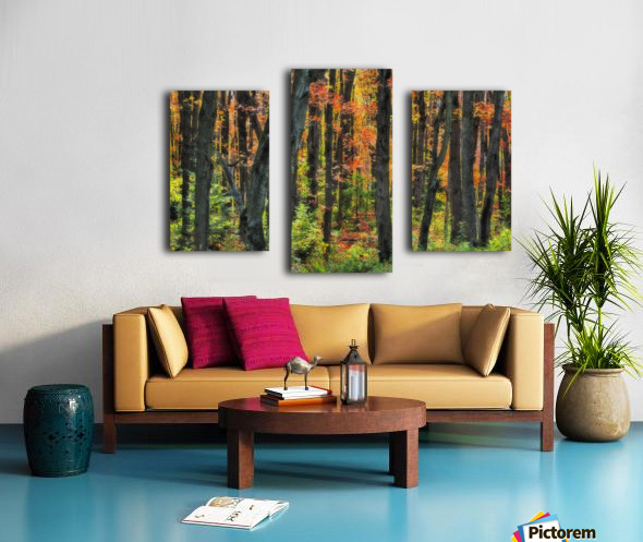 Autumn Sugar Maple, Yellow Birch And Balsam Firtrees. Algonquin Provincial Park, Ontario. Canada. Canvas print