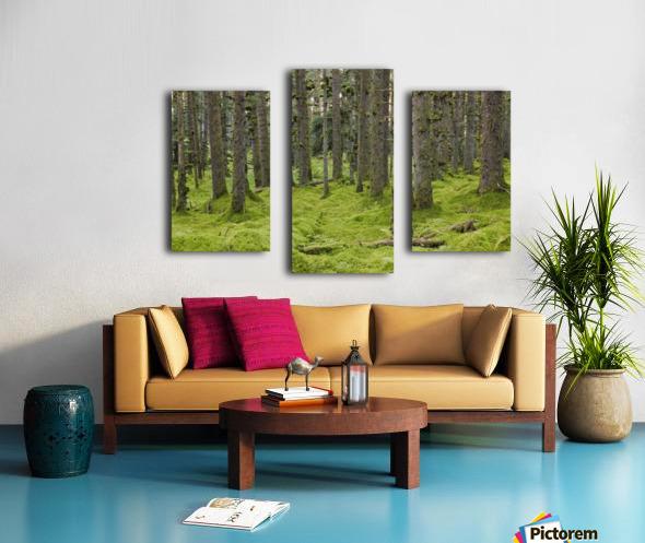 Spruce Forest & Moss Near Coast Kodiak Island Southwest Alaska Canvas print