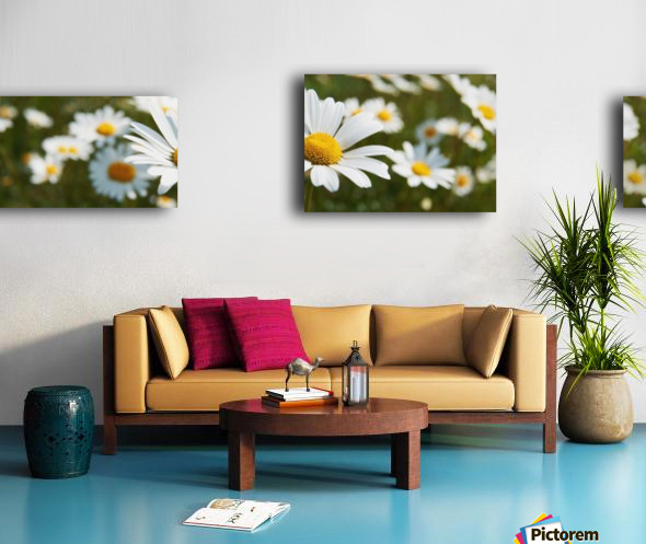 Close up of daisies in a meadow;England Canvas print