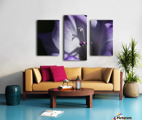 Purple gladiolus; Astoria, Oregon, United States of America Canvas print