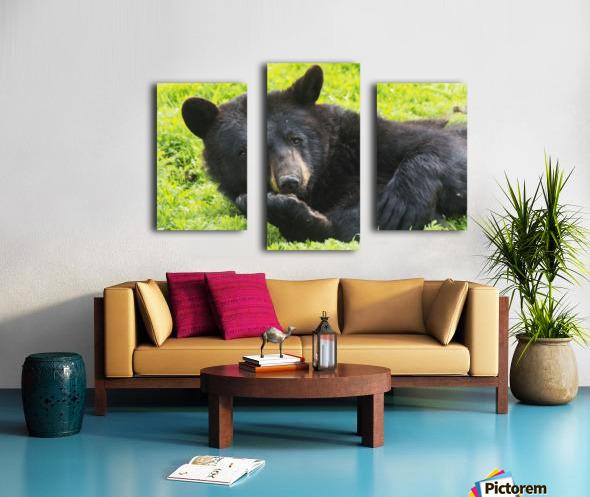 A black bear rolls around in the lush green grass Canvas print