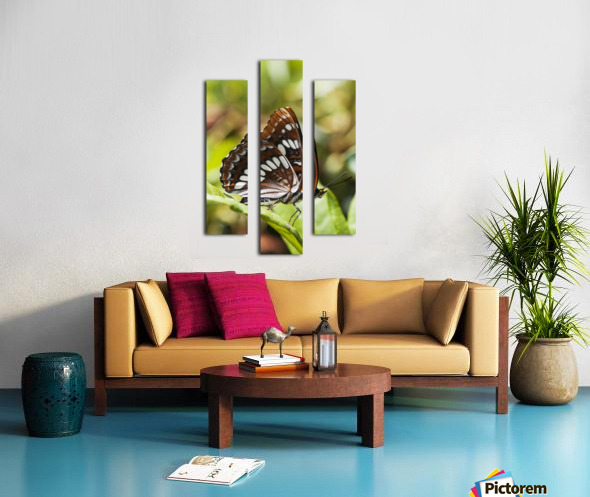 A White Admiral Butterfly (Limenitis arthemis) rests on a leaf; Astoria, Oregon, United States of America Canvas print