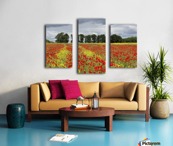A field with an abundance of red and yellow flowers; Northumberland, England Canvas print