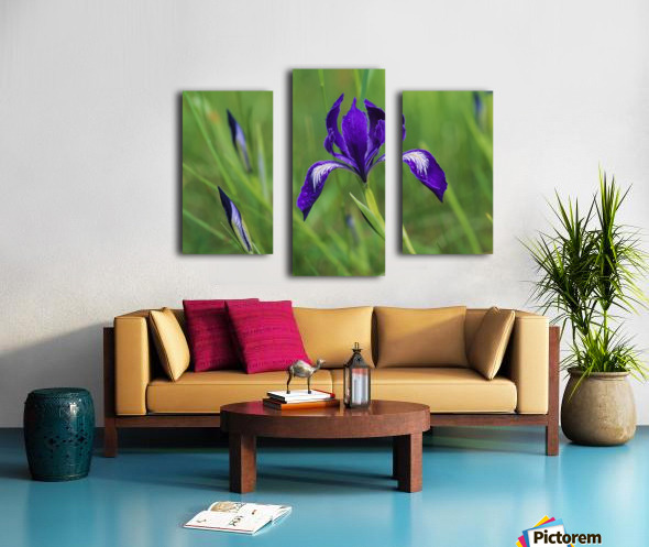 Oregon Iris (Iris tenax) blooms in the forest; Florence, Oregon, United States of America Canvas print