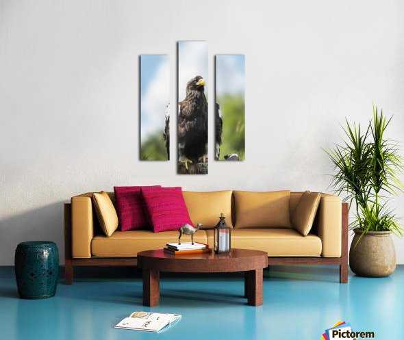 Golden Eagle, Assiniboine Park Zoo; Winnipeg, Manitoba, Canada Canvas print