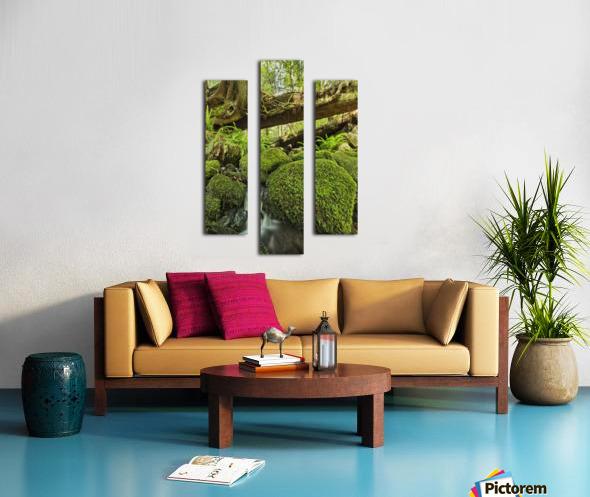 Rainforest in Avatar Grove near Tofino; British Columbia, Canada Canvas print