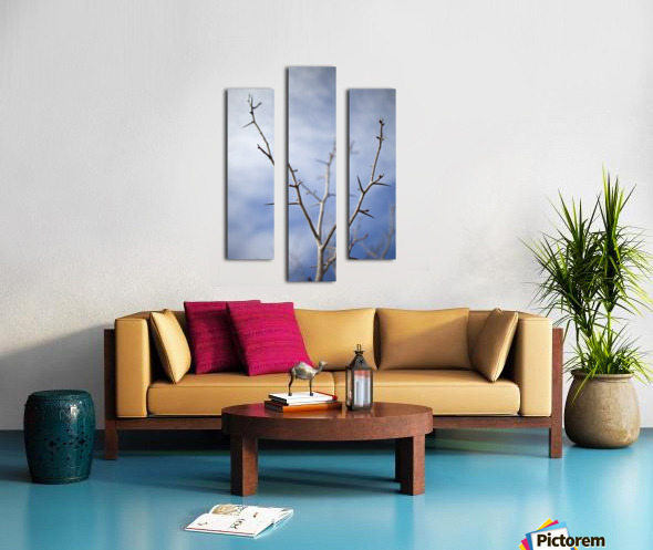 Tree with buds in springtime; Milton, Ontario, Canada Canvas print