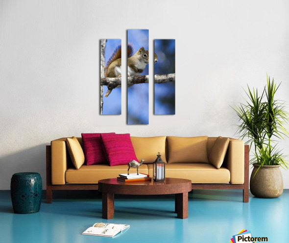 Eastern grey squirrel (Sciurus carolinensis) perched on a branch; Quebec, Canada Canvas print