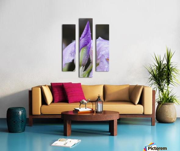 Close up of Iris; Quebec, Canada Canvas print