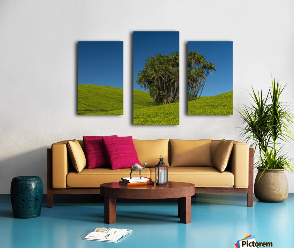 Collection of palm trees amongst hills covered in tea bushes, Satemwa Tea Estate; Thyolo, Malawi Canvas print