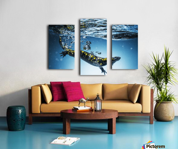 Salamander (Caudata) swimming in water; Tarifa, Cadiz, Andalusia, Spain Canvas print