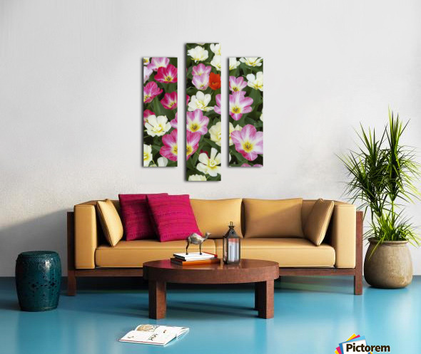 Flowers at Keukenhof Gardens; Amsterdam, Holland Canvas print
