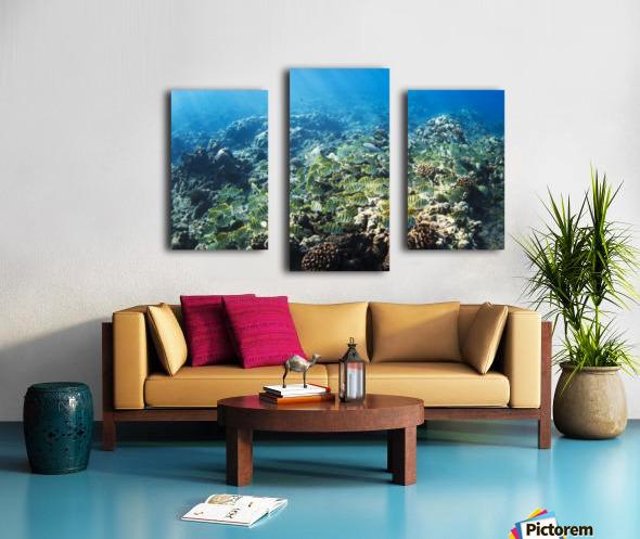 Tropical Reef in Hawaii- Canvas print