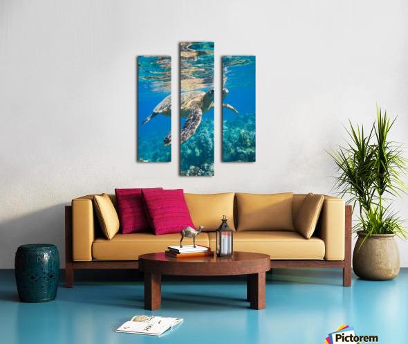green sea turtle swimming in ocean sea Canvas print