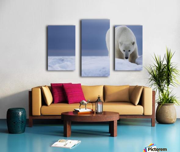 Polar bear (Ursus Maritimus); Churchill, Manitoba, Canada Canvas print
