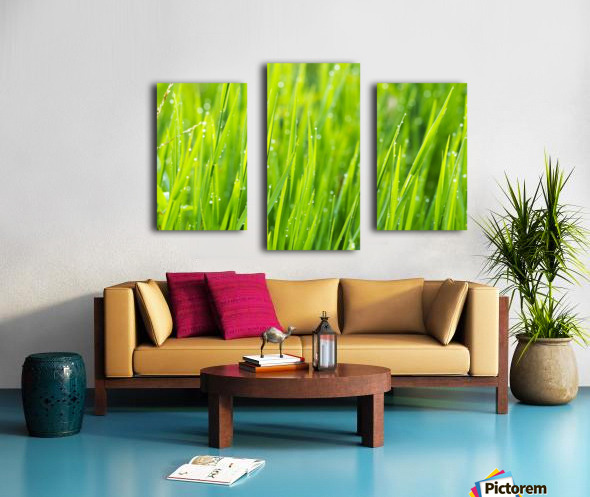 Close up of fresh grass with water drops in the early morning Canvas print