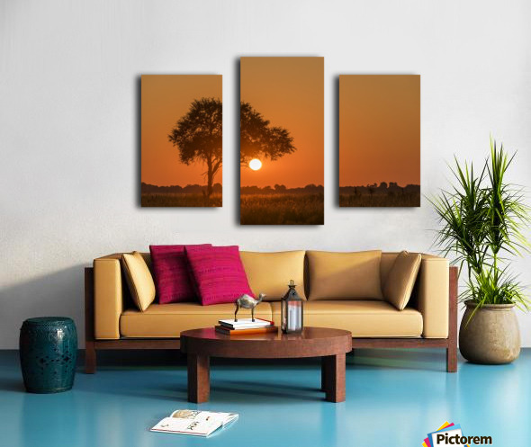 Backlit grass and silhouetted tree at sunset; Botswana Canvas print