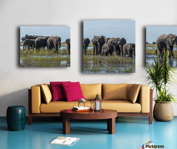 Panorama of elephants (Loxodonta africana) crossing shallow muddy river; Botswana Canvas print