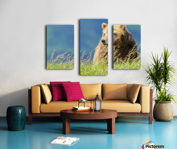 Portrait of a brown bear (portrait), Katmai National Park; Alaska, United States of America Canvas print