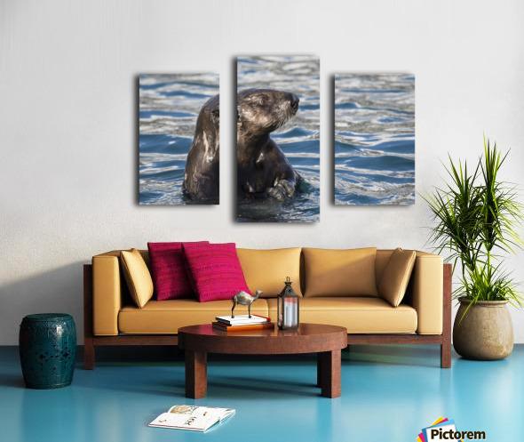 Sea Otter (Enhydra lutris) swims in Resurrection Bay near Seward small boat harbour in south-central Alaska; Seward, Alaska, United States of America Canvas print