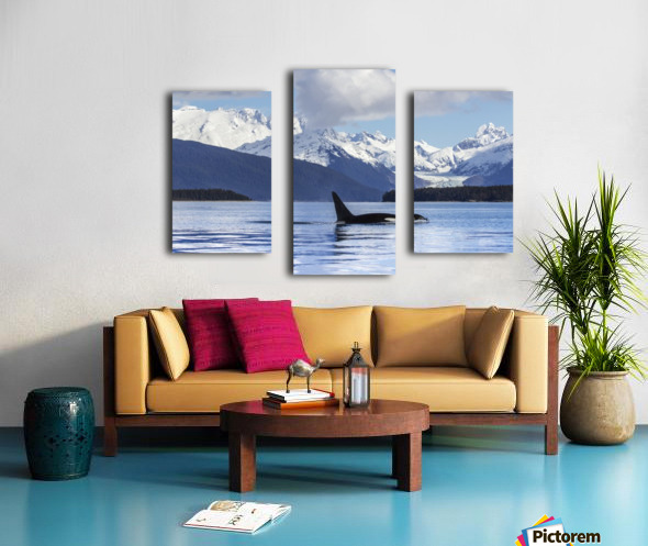An Orca Whale (Killer Whale) (Orcinus orca) surfaces in Lynn Canal, Herbert Glacier, Inside Passage; Alaska, United States of America Impression sur toile