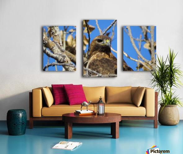 Golden Eagle VP3 Canvas print