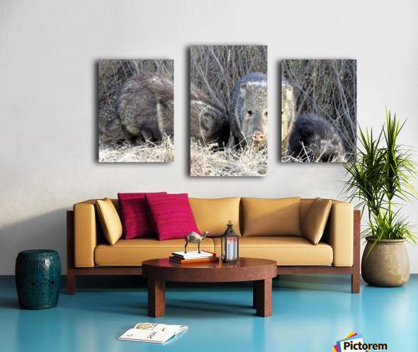 Herd of Javelinas VP2 Canvas print