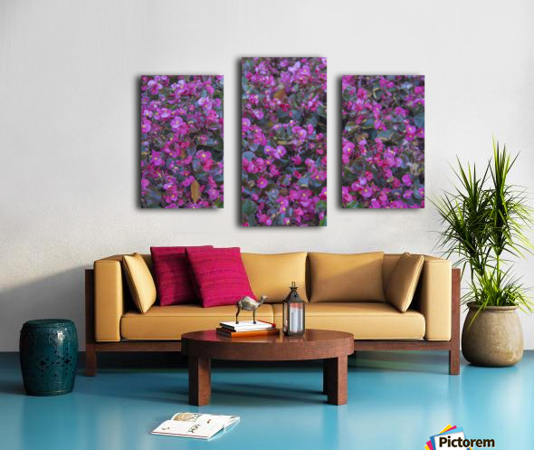 Bubble Gum Begonia Canvas print