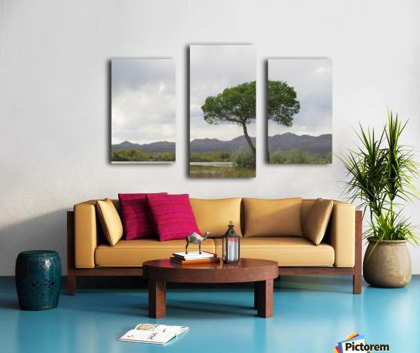 Tree at the Bosque de Apache Wildlife Sanctuary VP1 Canvas print