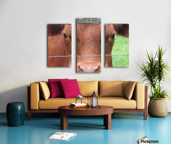 Cow in Stevenson, MD VP 2 Canvas print