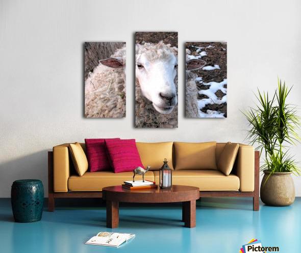 Lamb in the Winter VP1 Canvas print