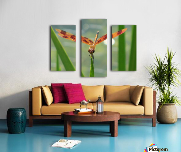 Dragonfly in Lincoln Park VP1 Canvas print