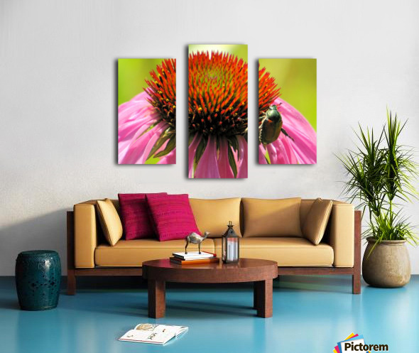 Echinacea and the Bee in Lincoln Park VP6 Canvas print