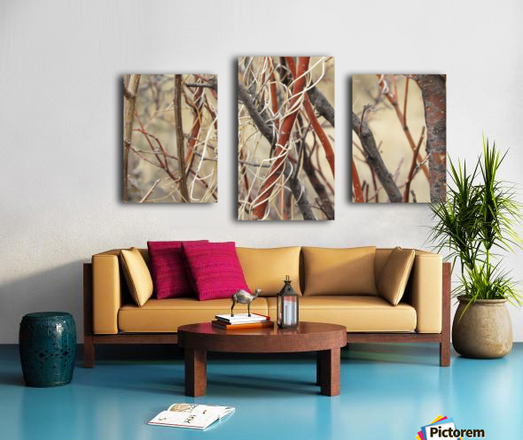 Twigs in the Sandia Mountains VP1 Canvas print
