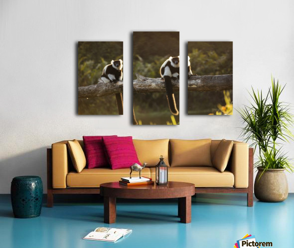 Lemur in his natural habitat, Madagascar Canvas print