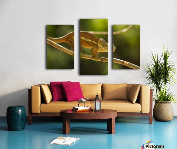 Chameleon in his natural habitat, Madagascar Canvas print
