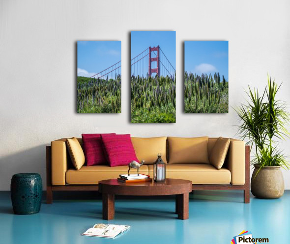 San Francisco Lupines Canvas print