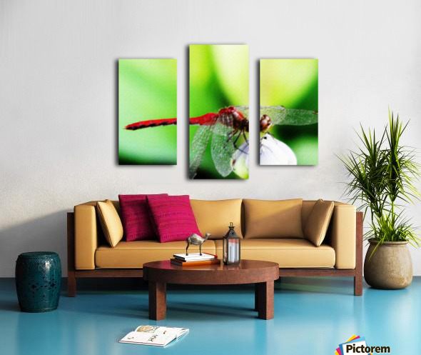 Red Dragonfly 3 Canvas print