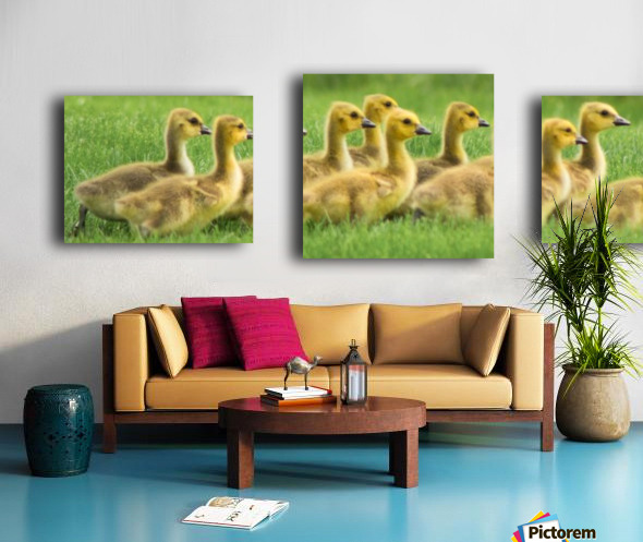 Get Your Geese in a Row Canvas print